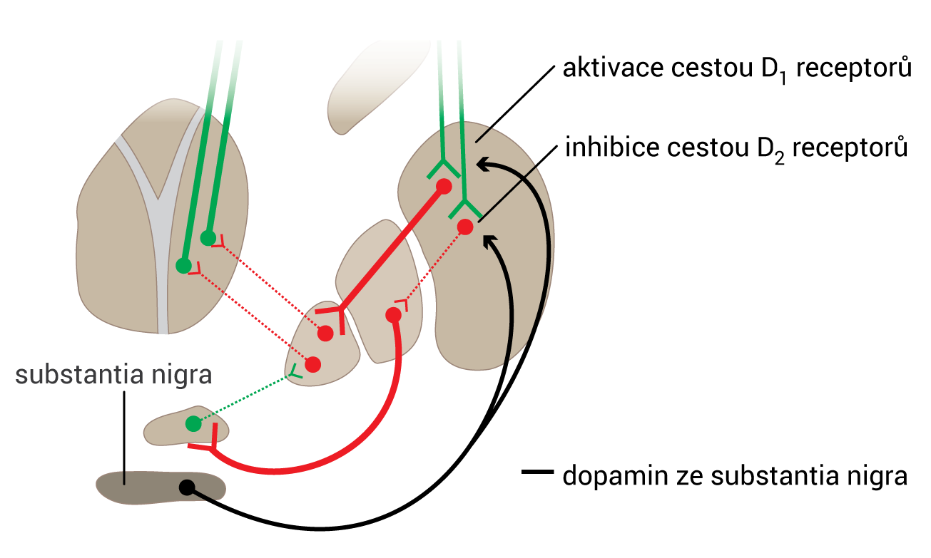 bg-dopamin
